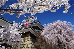 上田城千本桜祭